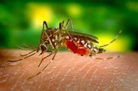 Lotta alle zanzare: il Comune di Ferrara affida al CFR il nuovo progetto di ricerca sulla qualità dei trattamenti